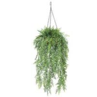 Hanging Plants Category