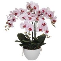 Potted Orchids Category